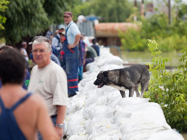 A dog can be seen walking on the Danube's reinforced pier in Galați, Romania on July 6th, 2010, following a flood warning caused by the river's record flow rate.